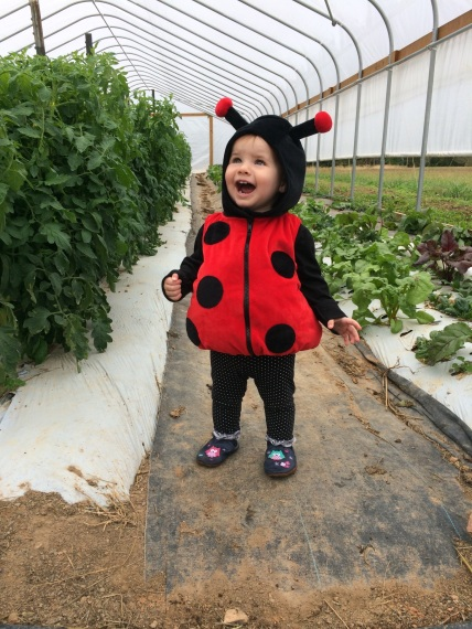 Our little lady bug